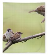 Tree Sparrows Fleece Blanket