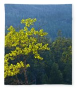 Tree With Yellow Leaves In Acadia National Park Fleece Blanket