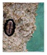 Trilobite Fleece Blanket