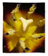 Triumph Tulip Named Gavota Fleece Blanket