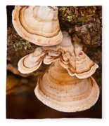 Turkey Tail Fungus 5 Fleece Blanket