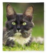 Turkish Angora Cat Fleece Blanket