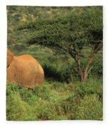 Two Elephants Walking Through The Grass Fleece Blanket