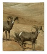 Two Male Rams At Zion Fleece Blanket