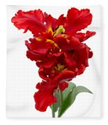 Two Red Parrot Tulips Fleece Blanket