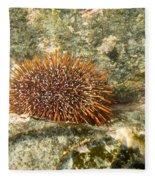 Underwater Shot Of Sea Urchin On Submerged Rocks Fleece Blanket