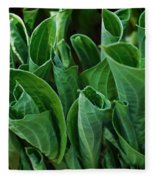 Unfurling Of The Hosta Fleece Blanket