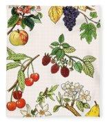 Unidentified Montage Of Fruit Fleece Blanket