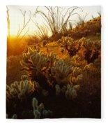 Usa, Arizona, Sonoran Desert, Ocotillo Fleece Blanket
