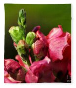 Variegated Snapdragon Fleece Blanket