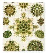 Varities Of Pediastrum From Kunstformen Der Natur Fleece Blanket