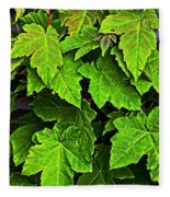 Vibrant Young Maples - Acer Fleece Blanket