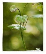 Vineyard Vine Fleece Blanket