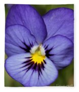 Viola Named Sorbet Blue Heaven Jump-up Fleece Blanket