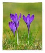 Trio Of Violet Crocuses Fleece Blanket