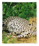 Waiting For Baby Cheetahs Fleece Blanket