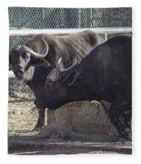 Water Buffalo - 2 Fleece Blanket
