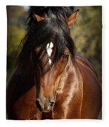Welsh Cob Stallion Fleece Blanket