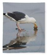 Western Gull Eats Clam Fleece Blanket