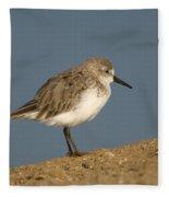 Western Sandpiper Calidris Mauri Fleece Blanket