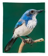 Western Scrub Jay Fleece Blanket