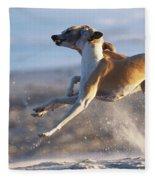 Whippet Dogs Fighting Fleece Blanket