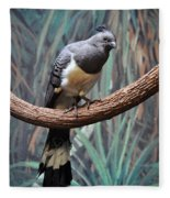 White-bellied Go-away-bird Fleece Blanket