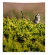 White-crowned Sparrow In A Bush Fleece Blanket