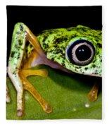 White-eyed Leaf Frog Fleece Blanket