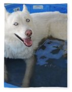 White Siberian Husky In Pool Fleece Blanket