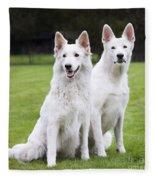White Swiss Shepherd Dogs Fleece Blanket