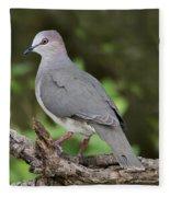 White-tipped Dove Fleece Blanket