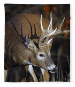 White-tailed Deer Antler Shadow Fleece Blanket