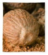 Whole Nutmeg Nuts Fleece Blanket