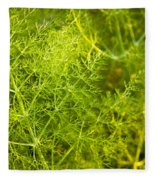 Wild Aniseed Fleece Blanket