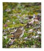 Wild Birds Hermit Thrush Fleece Blanket