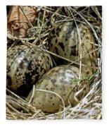 Willet Catoptrophorus Semipalmatus Eggs Fleece Blanket