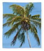 Windblown Coconut Palm Fleece Blanket