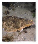 Winter Flounder Fleece Blanket