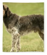 Wirehaired Pointing Griffon Fleece Blanket