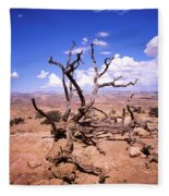 Withered Tree Paria Canyon Fleece Blanket