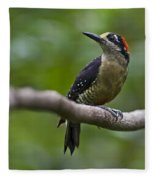 Woody Woodpecker.. Fleece Blanket