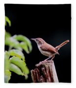 Wren - Carolina Wren - Bird Fleece Blanket