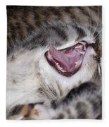 Yawning Kitten Fleece Blanket