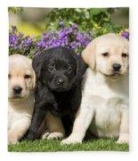 Yellow And Black Labrador Puppies Fleece Blanket