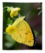 Yellow And Yellow Sulphur Butterfly Fleece Blanket