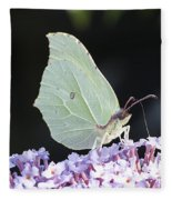 Yellow Brimstone Fleece Blanket