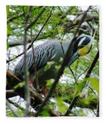 Yellow Crowned Night Heron In Display Fleece Blanket