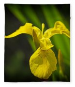 Yellow Flag Flower Outdoors Fleece Blanket