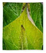 Yellow Green Skunk Cabbage Square Fleece Blanket
